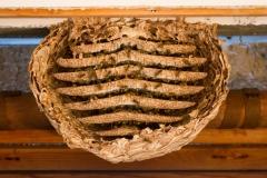2011 - Umsiedeln von Wespen und Hornissen
