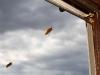Hornissen im Anflug